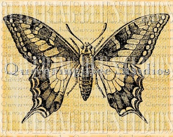 Butterfly Digital Graphic Download-fabric transfers decoupage mixed media pillows scrapbooking no 0006