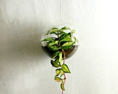 Create Your Own Terrarium // Hanging Glass Globe 6.5""