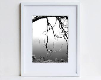 Zen Decor, Black and White Photo, Meditative Image, Branch Silhouette