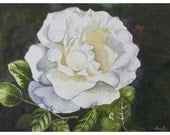 Garden White Rose Watercolor Painting