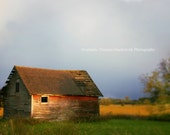 Fall, Yellow,  Barn, Rustic, Farm, Brown, Yellow, Flowers, Gold, Nature Photography