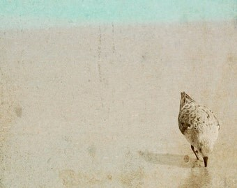 Sandpiper Photograph, Textured Beach Bird print, pale sepia, sea green teal wall art, 8x8 beach sandpiper art