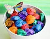Dyed Ark Sea Shells (3 oz or 7 oz bag) ~ 3 x 4 inch or 4 x 6 inch bag ~ Colorful Shells ~ 6 colors ~ Rainbow shells ~ Crafting Shells