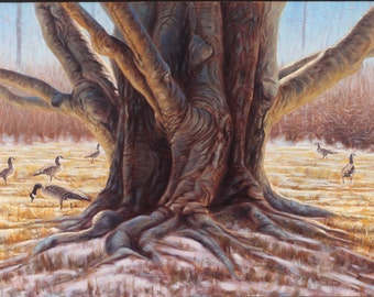 Beech Party-Canada Geese (original oil painting)