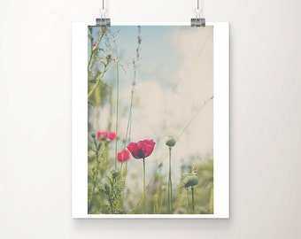 pink poppy photograph pink poppy print pink flower photograph pink flower print neon pink decor english garden photograph