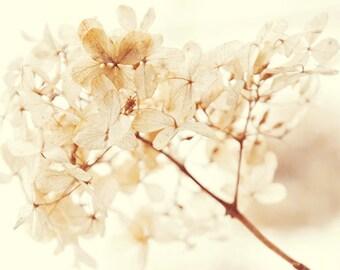 Dried flower picture, Hydrangea photo, Flower photography, flower print, hydrangea Print, white flower photo, wall art, winter flower print