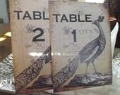 Love Birds table cards Birds Floral wedding cards Garden wedding Victorian table number cards Peacok Beach wedding