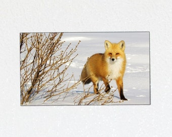 Red Fox Magnet - Fox Photography Magnet, Wildlife Photo Magnet, Fox Animal Magnet, Fox in Snow, Woodland Fox, Nature Magnet, Animal Lover