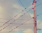 Swallows on a line, birds on a wire, line of birds in blue sky with white clouds, old telegraph pole, square photograph print