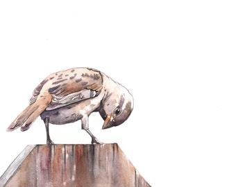 Sparrow ORIGINAL watercolor painting