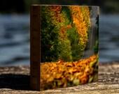 Fall Cruising, bamboo block,  wall art, decor, fall, autumn, leaves, harvest, photography, print, wood, landscape, seasons, seattle,