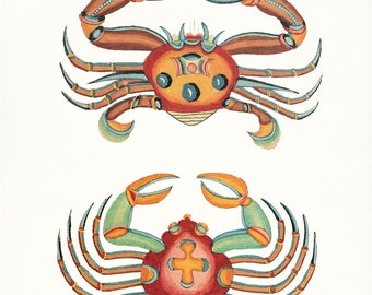 Coastal Decor Fanciful Crab Print No. 3