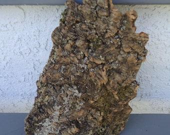 Medium Cork Bark