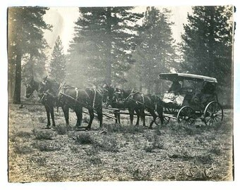 Travel HORSE and Buggy Carraige traveling thru rough ground Forrest OLD PHOTO possible new settlers antique