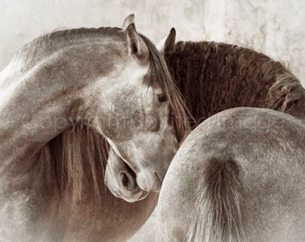 MOMENTO - ANDALUSIANS,  Edition Print, Valentine, Rustic Wall Decor, Equine art, Horse Photography, Love & Romance