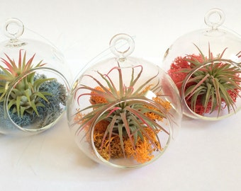 Orb Air Plant Hanging Terrarium Clear Glass Orb Kit Random Fun Pack