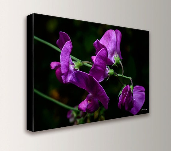 "Floral Art - Canvas Print - Flower Photography - Contemporary Art - Orchids -  "" Purple Flowers """