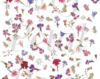 Digital Download Tiny Pressed flowers