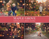 "Fall photo overlays ""Maple Grove"", falling leaves photo overlay, autumn photo overlays for Photoshop"