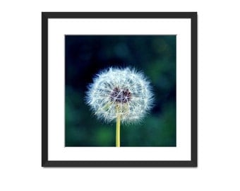 Dandelion Nature Photography - Fine Art Print - Magical Dandelion Soft Green Teal Yellow White Wall Art