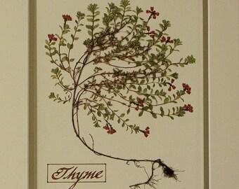 herb print thyme wall decor herbal art set of 4