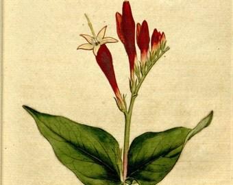 Botanical, Nature print, Nature, Botanical art, Flower print, Wall decor, Nature art, 80