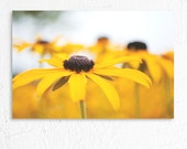 Dreamy Floral Nature Photography Brown Eyed Susan Photo Print
