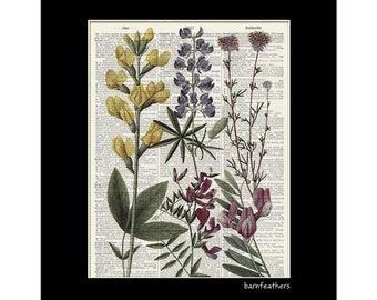 Wildflowers - Vintage Illustration printed on a Dictionary Page - Book Art Print  - Home Decor No. P412