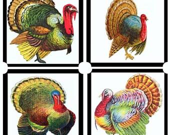 Thanksgiving Turkey Coasters