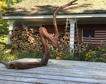 Decorative Cedar Root