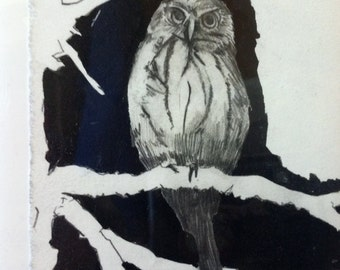 Owl graphite and ink drawing