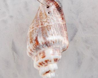 UNIQUE>> Trumpet Sea Shell, 52mm Pendant Bead