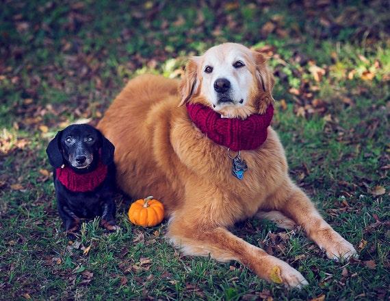 Xl Dog Sweater Knitting Pattern : Dog circle scarf pattern sized s xl diy by pattymacknits