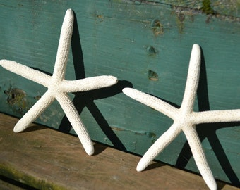 "White Finger Starfish ( 4-5"") 