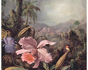 Martin Johnson Heade Floral Hummingbird 11x14 Canvas Print, orchids, birds