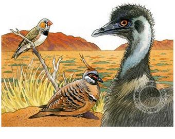 Bird illustration - Outback trio - bird art, print of original artwork