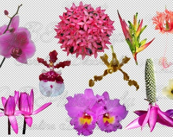 Tropical flowers Png. files.