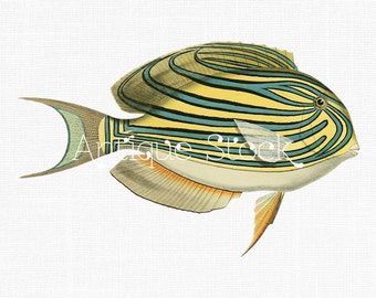Fish Clipart 'Tarry Hogfish' Antique Fish by AntiqueStock on Etsy