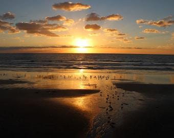 Birds of the Sea, Seagulls, Clouds, Sunset, South Carlsbad Beach, California