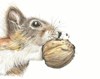 Squirrel eating a nut - Watercolour and Ink Drawing - Animal - Mounted Squirrel Giclee print - Art Picture - Picture and gift for the home