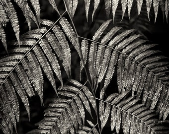 Nature Photography, Ferns, Travel, Thailand, Forest, Summer, Fine Art Black and White Photography, Wall Art, Home Decor, Living Room Decor