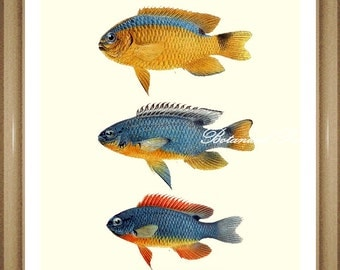 "Fish Print. Sea Life. Tropical fish Print. Damselfish. 5x7"", 8x10"" 11x14"""