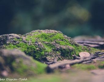 Mossy Rocks Fine Art Print