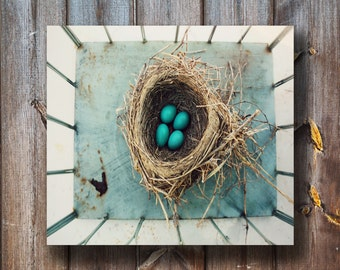 The Nest - Blue Egg Photo - Nature Photography - Photography Print - Instant Download