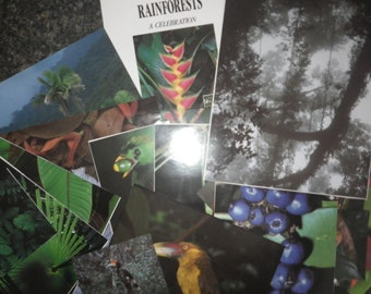Rainforest Paper Ephemera
