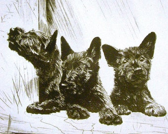 Diana Thorne Vintage Dog Print - 1936 - Three SCOTTISH TERRIERS - Weather Bureau - Fine Quality Professionally Matted Art Ready to Frame Art