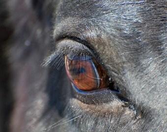 Horse Eye, Horse Art, Fine Art, Horse Photograph, Eye