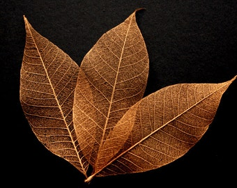 Copper Skeleton Leaves