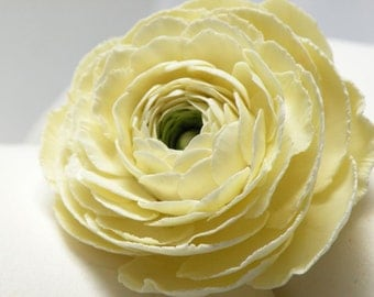 Gumpaste Ranunculus cream-colored