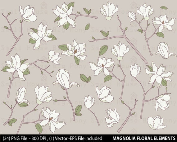 Magnolia Flower Clip art, Clipart -digital clip art set -24 PNG files and 1 Vector included in Zip